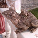 İkili Kurbağa Figürü
