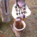 Şemsiyelik Maymun Maketi