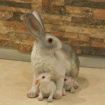 Ada Yavrulu Tavşan Figürü