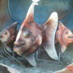 Akvaryum Balığı Figürü
