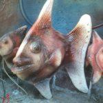 Akvaryum Balığı Maketi