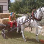 At Arabası 3 Parça Konsept