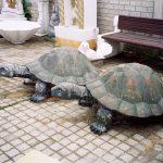 Büyük Kaplumbağa Maketi