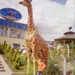 Büyük Zürafa Maketi