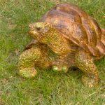 Küçük Kaplumbağa Figürü