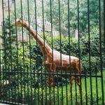 Küçük Zürafa Maketi