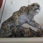 Kayada Asya Leoparı Figürü