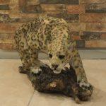 Kayada Asya Leoparı Maketi