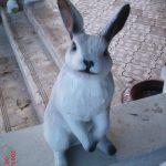 Kulaklı Tavşan Heykeli