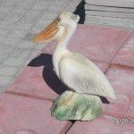 Pelikan Maketi