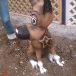 Rintintin Figürü