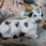 Yatan Mini Koyun Heykeli